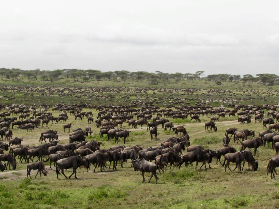 Nomad Tanzania Great Migration 2
