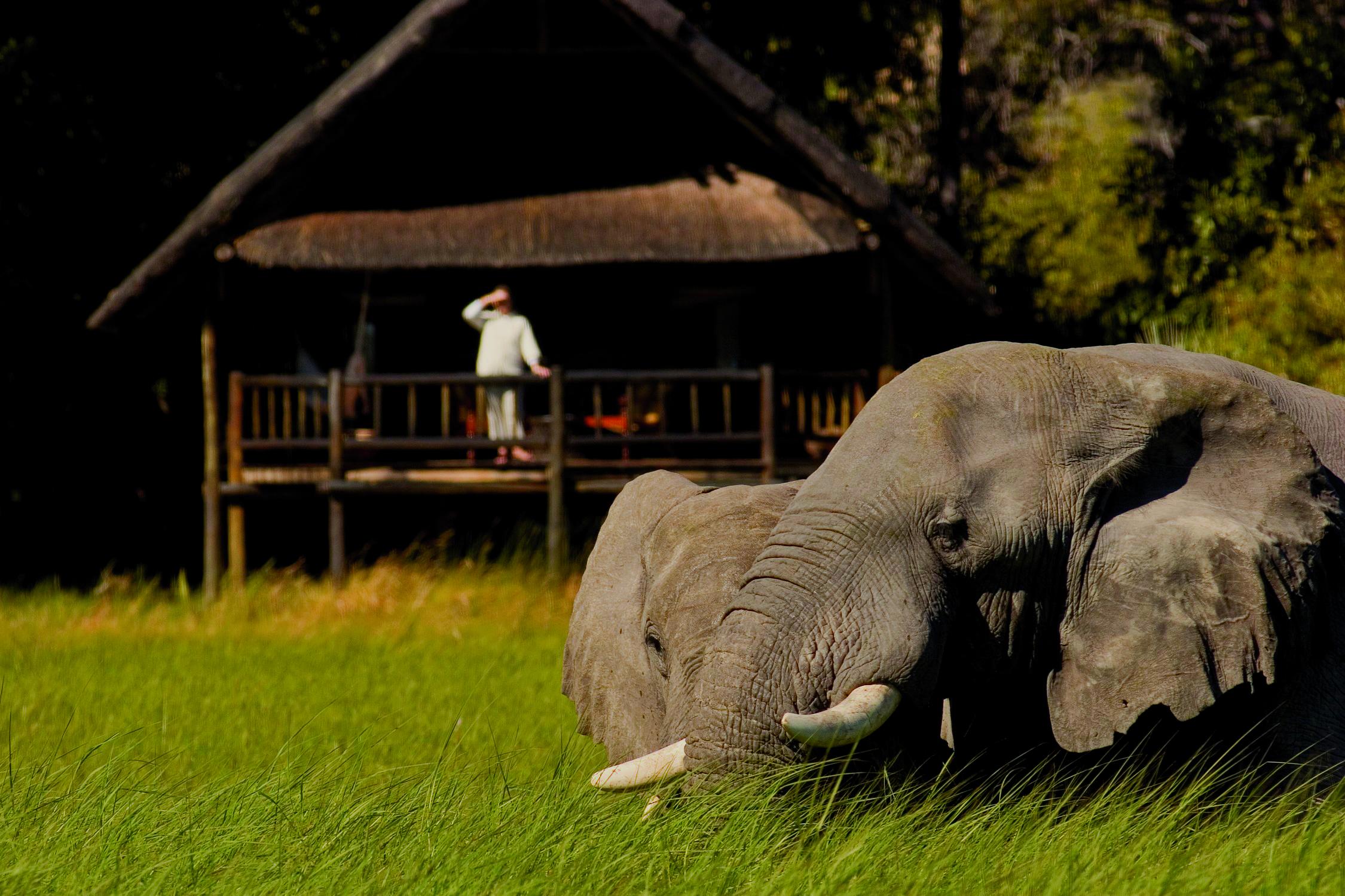 Easter Botswana Safari