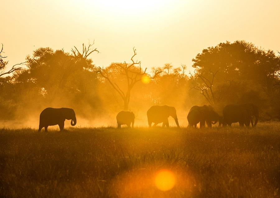 Festive season, family holidays, Botswana, African safari