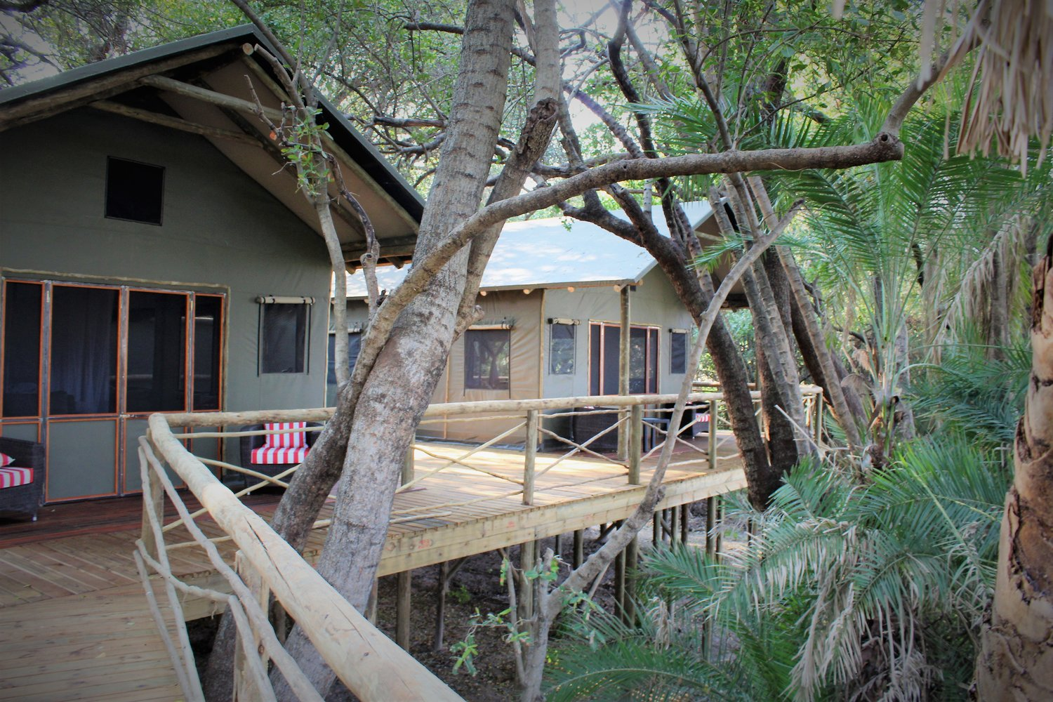 Liquid Giraffe, Setari Camp, Botswana, Okavango Delta, Luxury Safari Accommodation, Safari Camp, Botswana Safari Experts