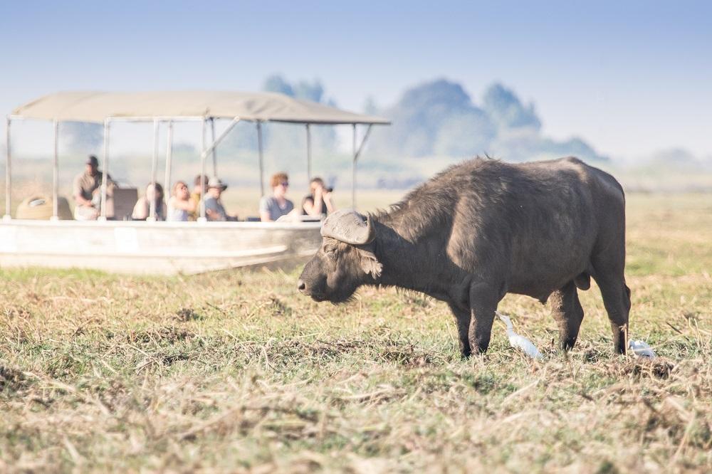 Liquid Giraffe, Under One Botswana Sky, Chobe Safari Lodge, Chobe Bush Lodge, Chobe National Park, Botswana, Safari Package, Safari Experts, Botswana Safari, Water Safari, Boat Safari, Sunset Boat Cruise