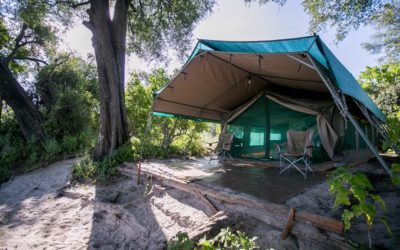 Liquid Giraffe, Bushman Plains Camp, Safari Camp, Okavango Delta, Botswana, Safari Package, Botswana Safari, Responsible Tourism, Ecotourism, Luxury Safari Accommodation, Luxury Travel, Honeymoon Destinations