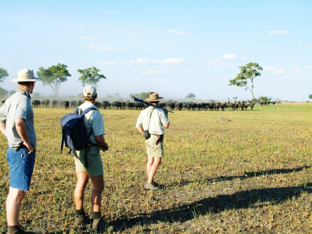 Liquid Giraffe, Botswana Walking Safaris, Botswana, Okavango Delta, Chobe National Park, Safari Package, Safari Experts, Botswana Safari, African Safari, Walking Safari