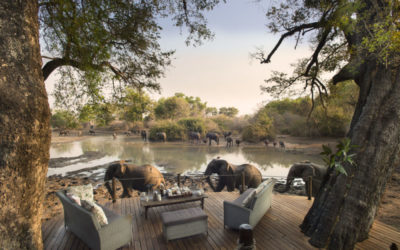 Liquid Giraffe, Zimbabwe, Zimbabwe Safari, Mana Pools National Park, Dry Season Safari, Zimbabwe Camps, Mana Pools Camps, Safari Package, Safari Experts, African Safari