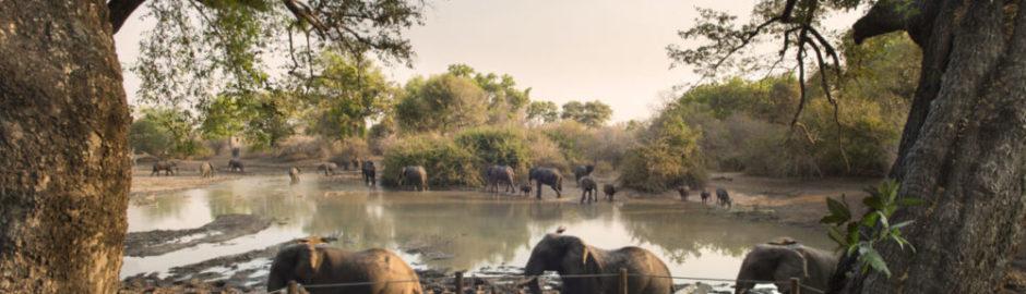 Liquid Giraffe, Zimbabwe, Zimbabwe Safari, Mana Pools National Park, Dry Season Safari, Zimbabwe Camps, Mana Pools Camps, Safari Package, Safari Experts, African Safari