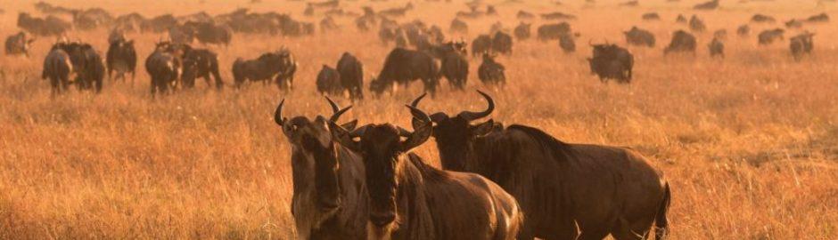 Liquid Giraffe, Serengeti, Serengeti Safari, Tanzania, Tanzania Safari, Dry Season Safari, Serengeti Camps, Tanzania Safari Camps, Safari Package, Safari Experts, African Safari