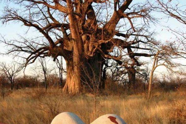 © Planet Baobab