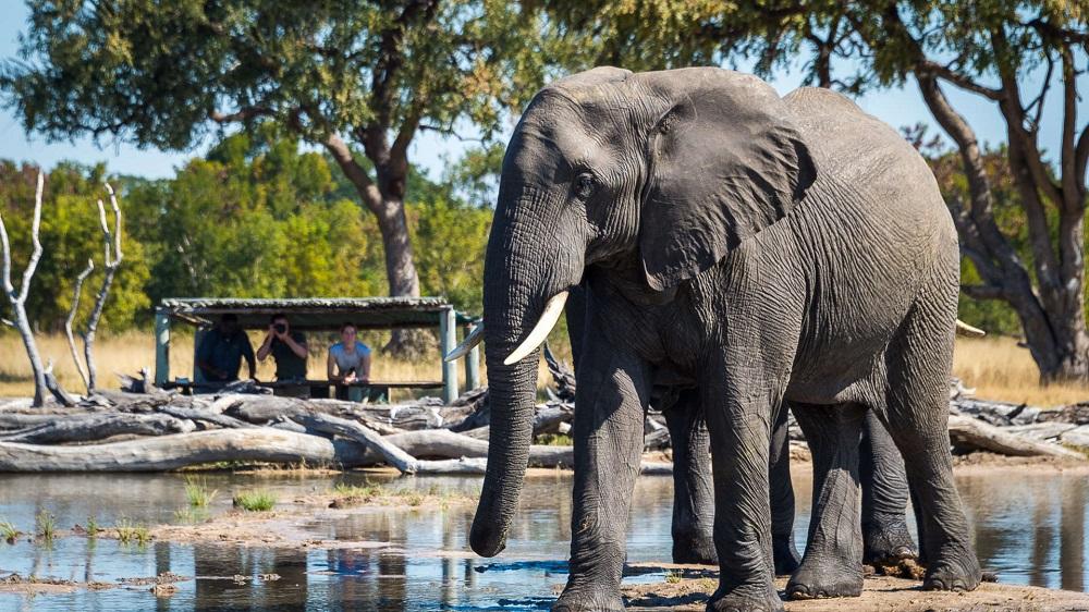 Liquid Giraffe, Responsible Safari, Responsible Tourism