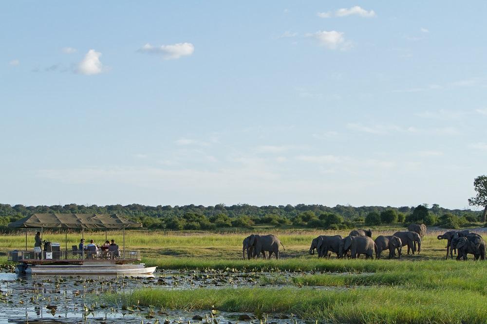 Liquid Giraffe, Wet Season Safari, Summer Wet Season Safari, Southern Africa Safari, Chobe National Park, Namib-Nauklaft