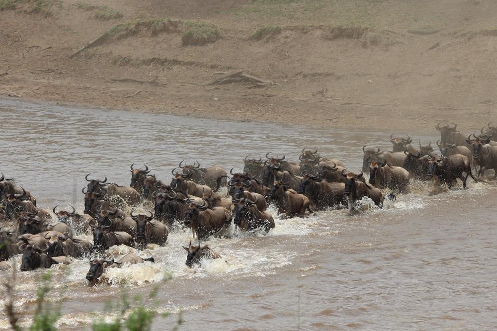 Liquid Giraffe, Tanzania Northern Circuit, Travel Ideas, Tanzania Safari, East Africa Safari, Ngorongoro Crater, Tarangire National Park