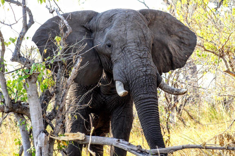 Liquid Giraffe, Botswana Safari, African Safari, Safari Operator
