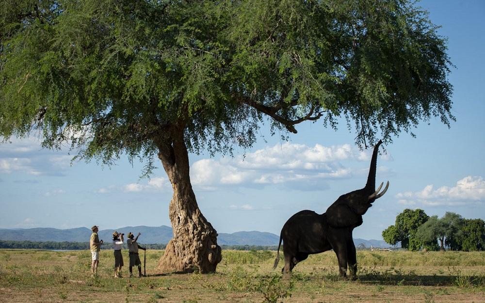 Liquid Giraffe, African Safari, African Safari Destinations, Southern Africa Safaris