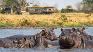 Liquid Giraffe, African Safari, African Safari Destinations, Southern Africa Safaris, Kafue National Park, Busanga Plains, Sky Safaris