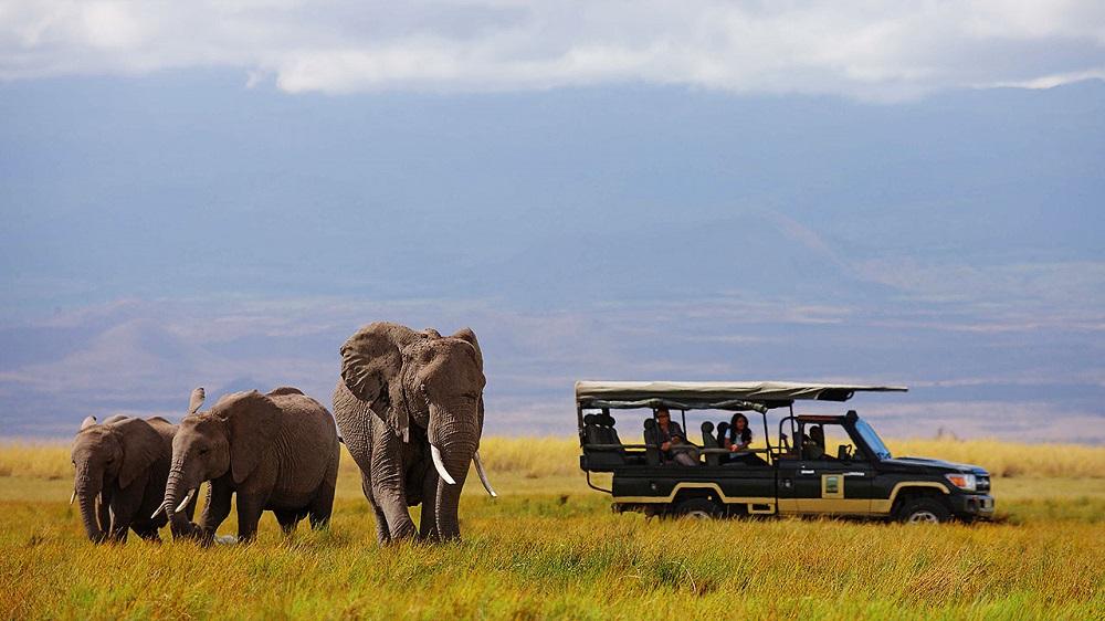 Liquid Giraffe, African Safari, African Safari Destinations, Eastern Africa Safaris, Game Drive, Elephant