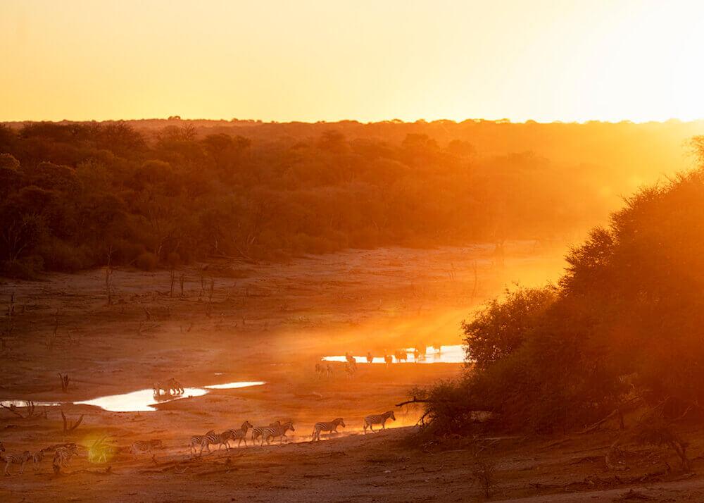 Liquid Giraffe, Wilderness Walking, Walking Safari, Walking for Wellbeing, Natural Selection Travel