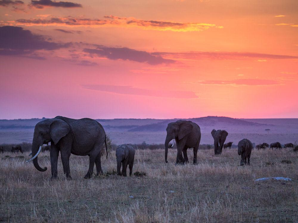 Liquid Giraffe, African Safari, Wildlife Safari, Big 5 Safari