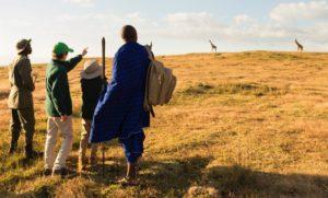 Nomad Tanzania, Nomad Entamanu, Ngorongoro Crater, Tanzania Safari Special, Liquid Giraffe, Wildebeest Migration