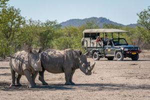 Namibia Self-drive Safari, Liquid Giraffe, Etosha National Park