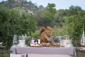 Liquid Giraffe, Big 5 Safari South Africa, African Wildlife, Lion in Londolozi