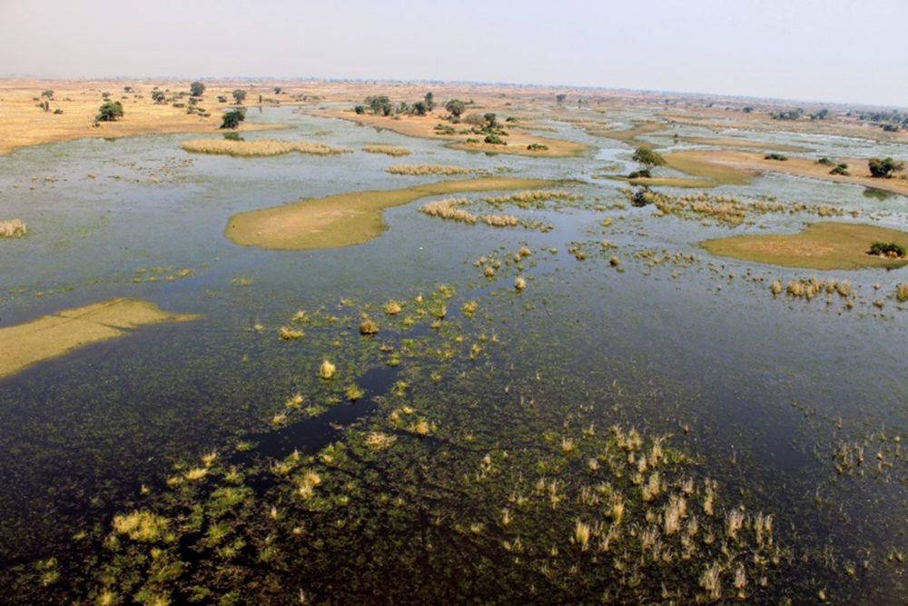Liquid Giraffe, Okavango Delta Botswana, Africa Wetlands