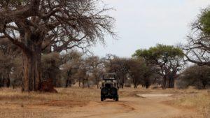 Baobabs, Safari Game Drive, Tarangire, Tanzania Safari, Liquid Giraffe