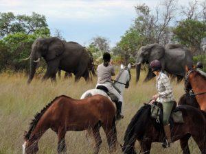 Botswana horse riding safari , African elephants